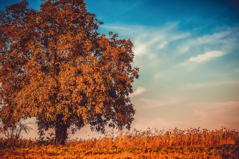 7 Steps to Create Your Autumn Marketing Plan This Summer
